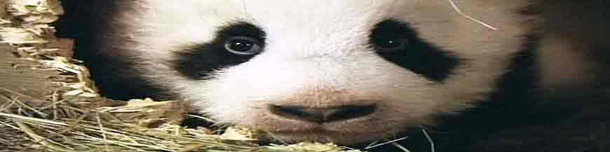 Bambus Zubehör